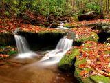 ea_50e87d0560de2_Wesser_Creek_in_Autumn__Nantahala